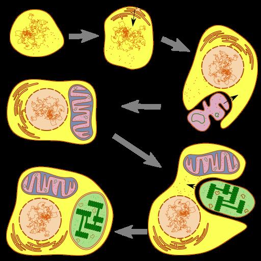 Endosymbiose